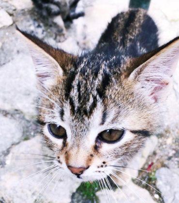 Aromaöle & Katzen – Gefährlich oder nicht? Was ihr unbedingt wissen solltet!