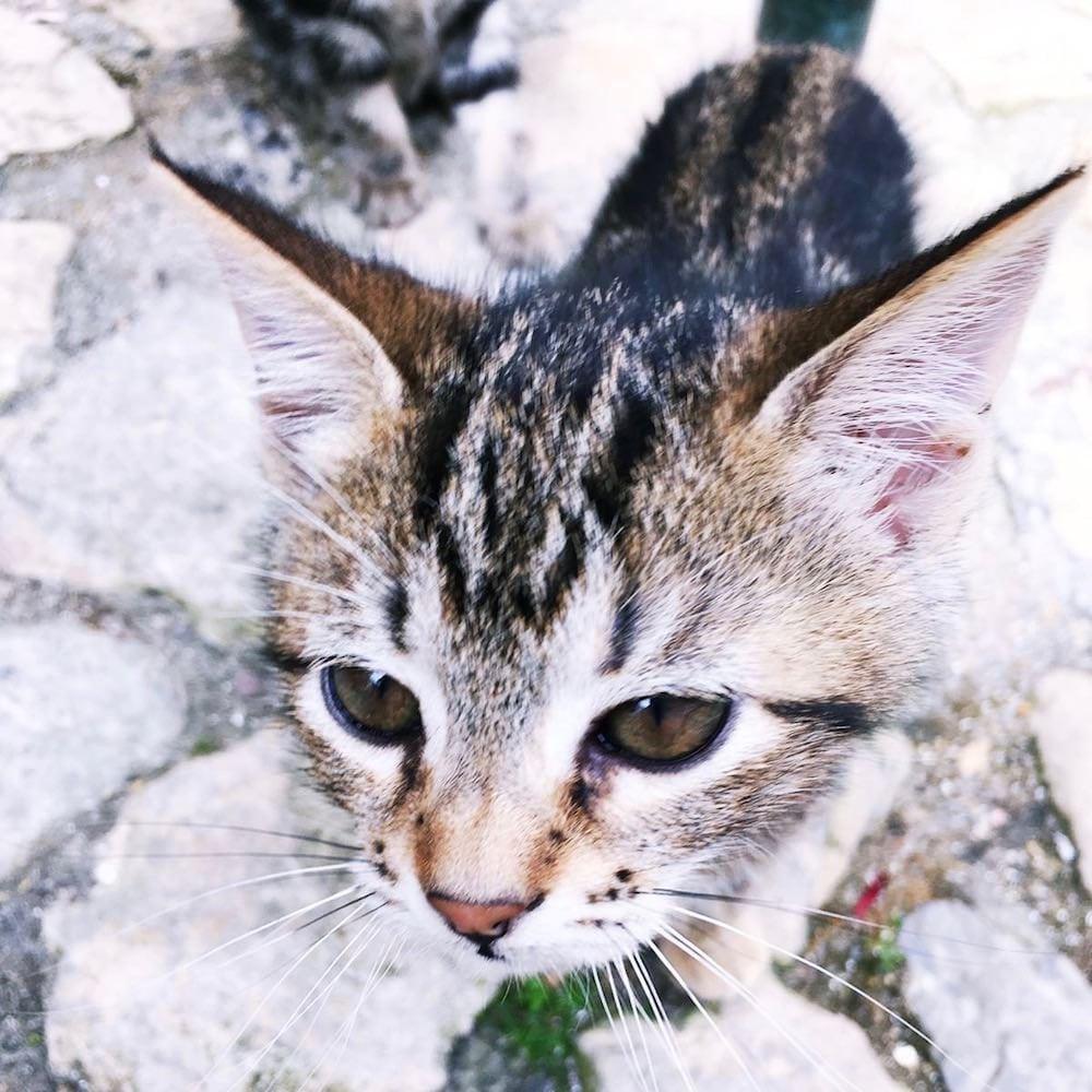 Aromaöl Katze